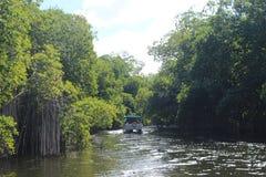 Svart flodkryssning, Jamaica, västra Indies royaltyfria foton