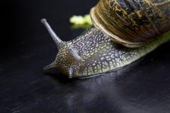 svart flytta sig för bakgrund över snail Arkivfoton