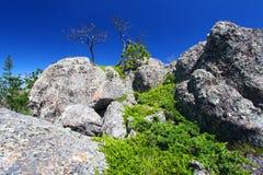 svart Forest Hills landskap royaltyfria foton