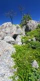 svart Forest Hills nationallandskap fotografering för bildbyråer