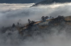 Svart Forest Mountains Landscapennature Trees Fog Tyskland Schwarzwald Schauinsland Arkivfoton