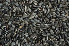 svart frö Royaltyfri Bild
