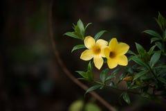 Svart gräsplan- och gulingkombination royaltyfria bilder
