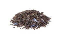 Svart greveGrey te som isoleras på vit arkivfoto