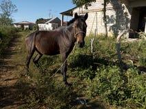 svart häst Royaltyfri Fotografi