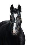 Svart häst med hjärtafläcken på vit bakgrund Unigue färgade Fotografering för Bildbyråer