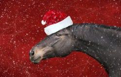 Svart häst med julhatten på rött bakgrundssnöfall royaltyfri bild
