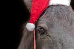 Svart häst som bär den santa hatten Arkivbild