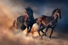 Svart häst två i öken fotografering för bildbyråer