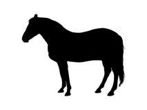 Svart hästkontur på vit bakgrund också vektor för coreldrawillustration Royaltyfria Bilder