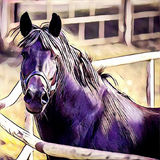 Svart hästnärbild arkivfoton