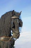 svart häststående Arkivfoto
