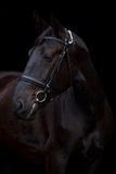 Svart häststående på svart bakgrund Royaltyfri Fotografi
