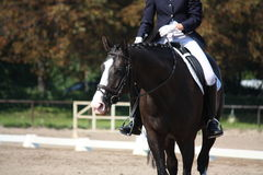 Svart häststående under dressyrkonkurrens Arkivfoto