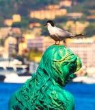 Svart hövdad seagull på port Pierre Canto i Cannes Royaltyfri Bild