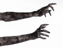 Svart hand av död, gå absolut, levande dödtema, halloween tema, levande dödhänder, vit bakgrund, mammahänder royaltyfri fotografi