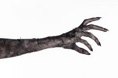 Svart hand av död, gå absolut, levande dödtema, halloween tema, levande dödhänder, vit bakgrund, mammahänder Royaltyfria Bilder