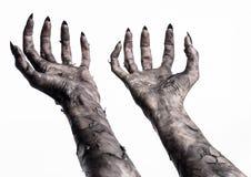 Svart hand av död, gå absolut, levande dödtema, halloween tema, levande dödhänder, vit bakgrund, mammahänder Arkivbilder