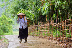 Svart Hmong kvinna i Sa-PA-dalen Arkivfoto