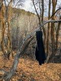 Svart Hoodietröja som hänger från träd i sen slinga för nedgångpanoramaskog på den gula gaffeln och Rose Canyon Trails i Oquirrh  Arkivfoton