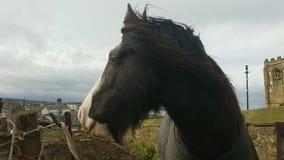 Svart Horse/Caballo neger Royaltyfri Bild