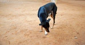 svart hund arkivfoto