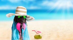 Svart hund för rolig sommar med sommartillbehör stock illustrationer