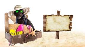 Svart hund för rolig sommar med sommartillbehör vektor illustrationer