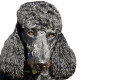 SVART HUND: hundframsida arkivfoto