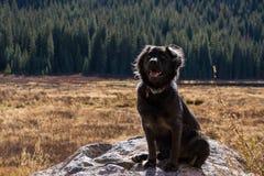 Svart hund i en äng Royaltyfria Foton