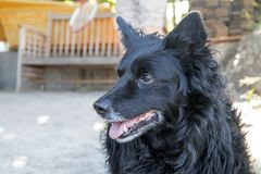 Svart hund i gården arkivbild