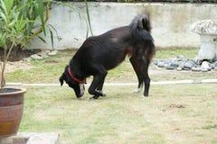 Svart hund i trädgård royaltyfria foton