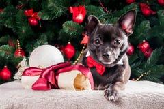 Svart hund med julbengåvan Arkivbild