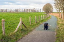 Svart hund med pinnen på en smal vandringsled i en landsbygd Arkivbilder