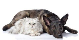 Svart hund och perser som tillsammans ligger katt. Arkivbilder