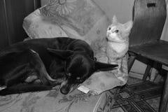 Svart hund och röd katt som tillsammans sover Royaltyfri Foto