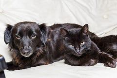Svart hund och svart katt arkivbild