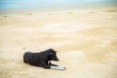 Svart hund som ligger på sanden på stranden vid havet i dagen royaltyfria bilder