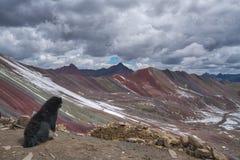 Svart hund som sitter förbise en bergskedja arkivfoton