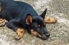 Svart hund som väntar på ägaren att få bort med ensamhet Arkivfoton