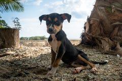 svart hund som vilar på stranden på ön Arkivbilder