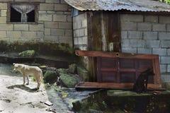 Svart hund - vit hund Royaltyfri Bild