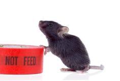Svart hungrigt behandla som ett barn musen bredvid kanalbandet som säger Royaltyfri Foto