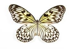 svart isolerad leucanoewhite för fjäril idé arkivbilder