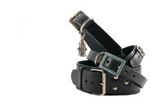 svart isolerat läder för kragar hund Arkivfoto