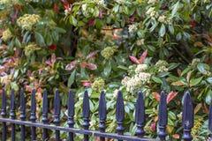 Svart järnstaket och trädgård Typisk trottoarstaket i London arkivfoton