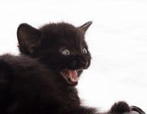Svart jama för kattunge Royaltyfri Foto