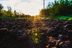 Svart jord plogade fältet till och med strålarna för sol` s Arkivbilder