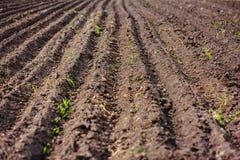 Svart jord plogat fält Jordtextur Royaltyfria Foton