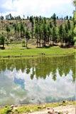 Svart kanjon sjö, Navajo County, Arizona, Förenta staterna, Apache Sitegreaves nationalskog royaltyfri foto